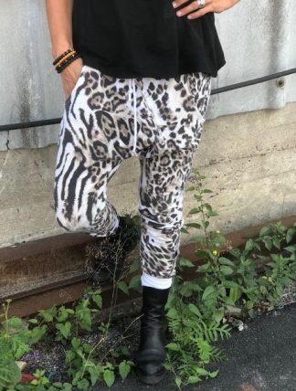 annemi leo zebra